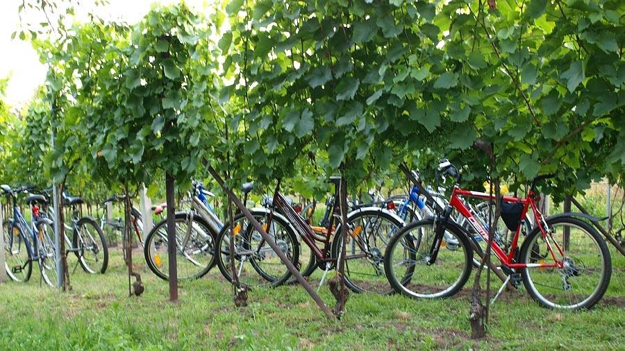 Tour de vinohrad