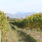 Řízená degustace novozélandských vín